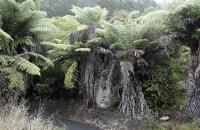 Pflanzen am Weg zur Cathedral Cove