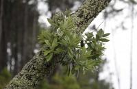 Blätter an Baumast