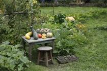 Garten mit angerichtetem Gemüse