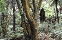 Schöne Baume gab es hier auch