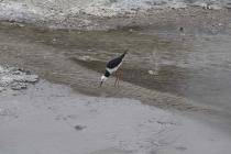 Vogel der hier scheinbar Nahrung findet
