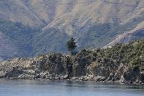 Vereinzelter Baum auf Felsen