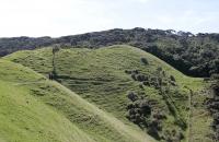 Typische Neuseelandlandschaft