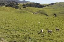 Da möchte man fast selber ein Schaf sein :-)