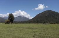 Landschaft nahe Hokitika