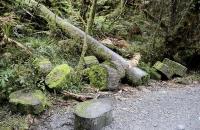 Umgeschnittener Baum am Wegesrand