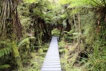 Weg durch den Regenwald