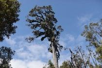 Großer Baum im Regenwald