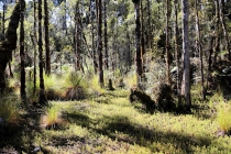 Pflanzen im Regenwald