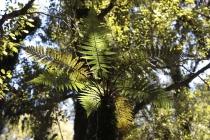 Blätter im Regenwald