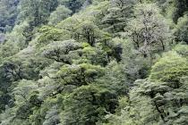 Bäume wohin man schaut