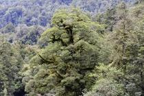 Baum der die anderen überstrahlt