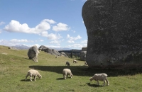 Rundherum grasten die Schafe
