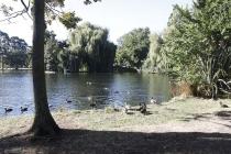 Teich am Campingplatz von Ashburton