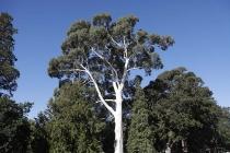 Alter Baum am Campingplatz
