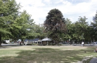 Park in Hanmer Springs