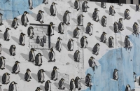 So sah ich doch noch meine Pinguine :-)