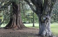 Alte Bäume im Botanischen Garten