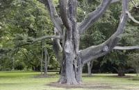 Alter Baum im Botanischen Garten