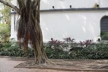 Baum im Kowloon Park