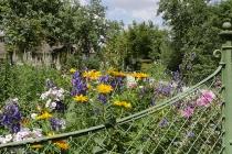 Viele Blumen im Vorgarten