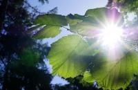 Blätter und Sonnenstrahlen