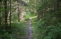 Schmaler Pfad durch den Wald