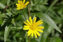 Blume am Wegesrand