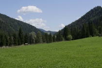 Pferdeweise mit saftigem Gras
