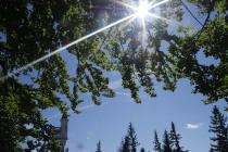 Sonnenstrahlen hinter Blättern