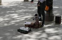 Puppenspieler nahe dem Plaza Nueva