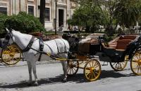 Eine von viele Kutschen in Sevilla