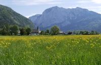 Blumenwiese mit Altaussee im Hintergrund