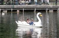 Schwan-Tretboot am Hallstättersee