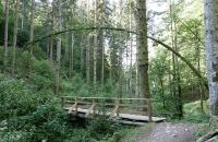 Baumbogen über Holzbrücke