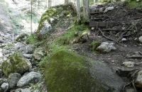 Moosige Felsen in der Rehbachklamm