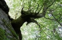 Baum aus Felsen raus wachsend