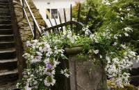 Blumen in der Festung Kufstein