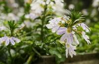 Blüten in der Festung Kufstein