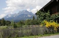 Alpengarten mit Wildem Kaiser im Hintergrund