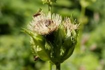 Insekten auf Pflanzen