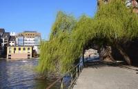 Grüner Baum hängt im Viertel La Petite France über Weg ins Wasser