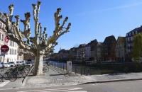 Solche knorrigen Bäume sieht man sehr viel in Straßburg
