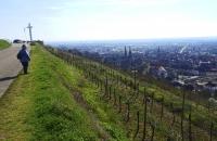 Blick auf die Weinberge und die Stadt Obernai