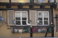 Gießkannen und der für das Elsass so typische Storch vor einem Fenster eines alten Hauses