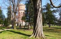 Alter Baum und Turm in einem Park