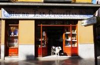 Hund kommt aus einem Bäckerladen