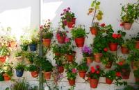 Blumentöpfe an einer Wand in Grazalema