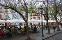 Cafes unter blühenden Bäumen in Cádiz