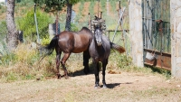 Unsere direkten Nachbarn - zwei Pferde auf der Weide